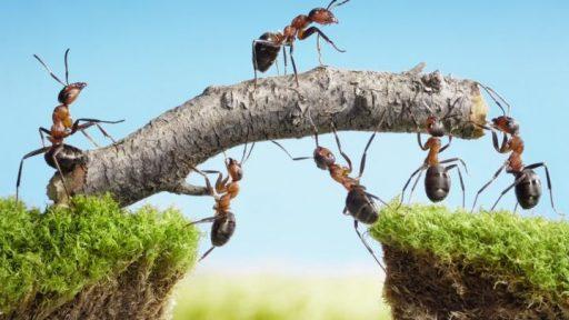 Innovación trabajo en equipo
