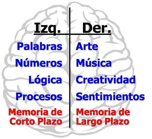 cerebro izquierdo derecho